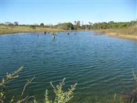 Sitio de 50 hectares a venda em Campo Verde MT