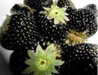 10 Sementes de Morango Negro
