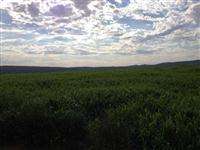 Excelente campo para plantação de soja - 90% aproveitável