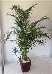 Plazza Eventos - aluguel de plantas ornamentais para eventos