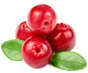 Cranberry /  - Desidratado
