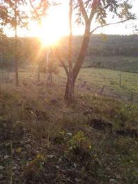 Fazenda de 172 alq Tocantins, Cidade de Aparecida do Rio Negro