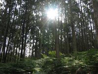 Venda de mato de eucalipto em pé