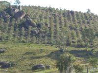 Pequena Fazenda com 47 hectares em Santa Catarina