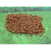 semente de sansão do campo(cerca viva)