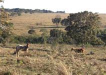 Fazenda de 218ha para Pecuaria e Agricultura - Direto c/ Proprietario