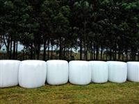 Bolas de pré-secado de aveia e azevém - Joia - RS