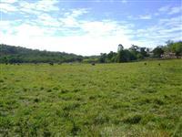 Fazenda Ótima 143 Alqueires;90 Km de Palmas;Porteira Fechada - R$ 2.500.000,00
