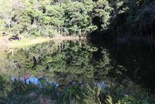 Sitio no sul de Minas Com Oliveiras