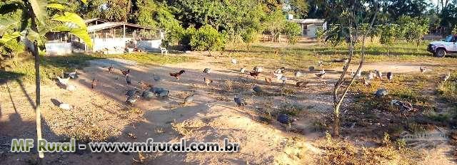 SÍTIO ÀS MARGENS DO RIO ABAETÉ, EM TRÊS MARIAS-MG