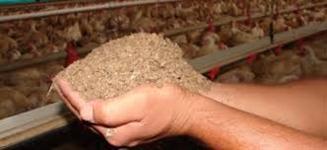 Cama de Frango de casca de arroz inteira ou moída !!
