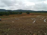 FAZENDA FORMOSO DO ARAGUAIA 36 ALQ. , C. 70 hectare de EUCALIPTO c.( 4 anos )