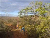 Vendo fazenda para reserva legal em Bom Jesus - Piauí