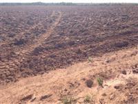 Fazenda Roreal - Nova Brasilandia/MT