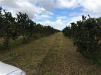 Sítio de 32 tarefas com 5.200 pés de laranja (novos) em produção