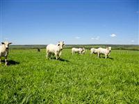 Fazenda em Caarapó, MS, boa para agricultura, com 1210 hectares – Ref. 712