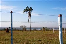 Fazenda a venda em Bataguassu, MS, com 319,44 hectares, rica em água