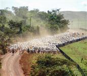Fazenda com 10.000 alqueirão - São Felix do Xingu/PA – Ref. 740