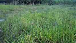 Fazenda com 3.117 hectares - Tangará da Serra/MT – Ref. 733