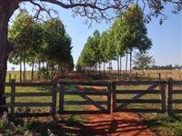 Fazenda com 1023 hectares - Rio Verde/MS - Ref. 730