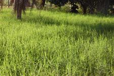 Fazenda com 319,44 hectares - Bataguassu/MS – Ref. 728