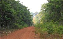 Fazenda a venda em Mato Grosso com 18.900 hectares – Ref. 724