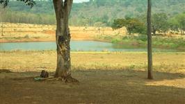 Fazenda com 10.446 hectares - Paranatinga/MT – Ref. 722