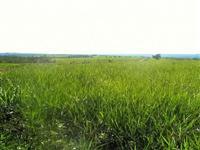 Fazenda com 20.000 hectares - Paranatinga/MT – Ref. 707