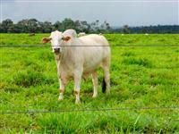 Fazenda plana em Terenos com 700 hectares – Ref. 218b