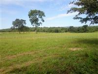 Fazenda com 19.360 hectares e dupla aptidão - Paranã/TO – Ref. 704