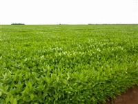 Fazenda com 15.452 hectares - Canarana/MT – Ref. 702