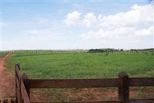 Fazenda com 9.600 hectares - Santo Antônio do Leste/MT – Ref. 699