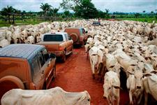 Fazenda no Pará com 19.732 hectares - Dupla aptidão – Ref. 694