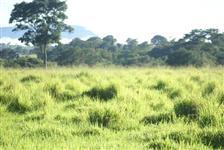 Fazenda com 3.600 hectares - São José/MT – Ref. 689