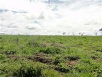 Fazenda com 10.194 hectares - Alta Floresta/MT – Ref. 688
