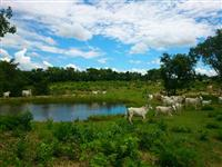 Fazenda com 500 hectares - Bonito/MS –  Ref. 671