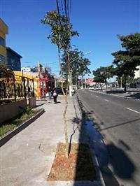 Mudas de DAP para arborização urbana