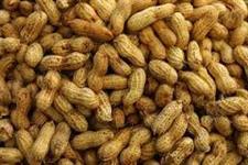 amendoim em grosso e varejo