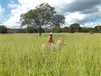 Fazenda Mirrinhos