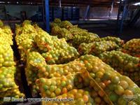 vendemos laranja pera rio ,valencia e natal otima qualidade