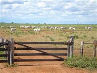 Haras em Alto Paraná - PR  com 48,40 hectares - Com renda