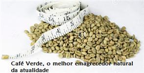 Café Verde O Melhor Emagrecedor Natural da Atualidade