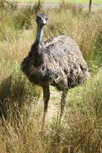 OVOS EMU AUSTRALIANO