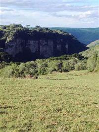 Fazenda com 530 Hectares em Vila Seca/RS