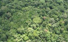 Área para Compensação Ambiental/Reserva Legal