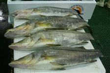 compro camarao e peixe vendo também quantidade