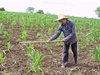 Procuro Sócio/investidor para fazenda