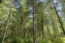 Troco ou vendo sitio 23 alq Rio Branco do Sul c 4,5alq de Pinus c 7anos
