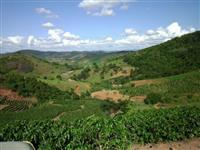 Fazenda produtora de café