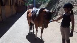 Cavalos de Esporte à Venda
